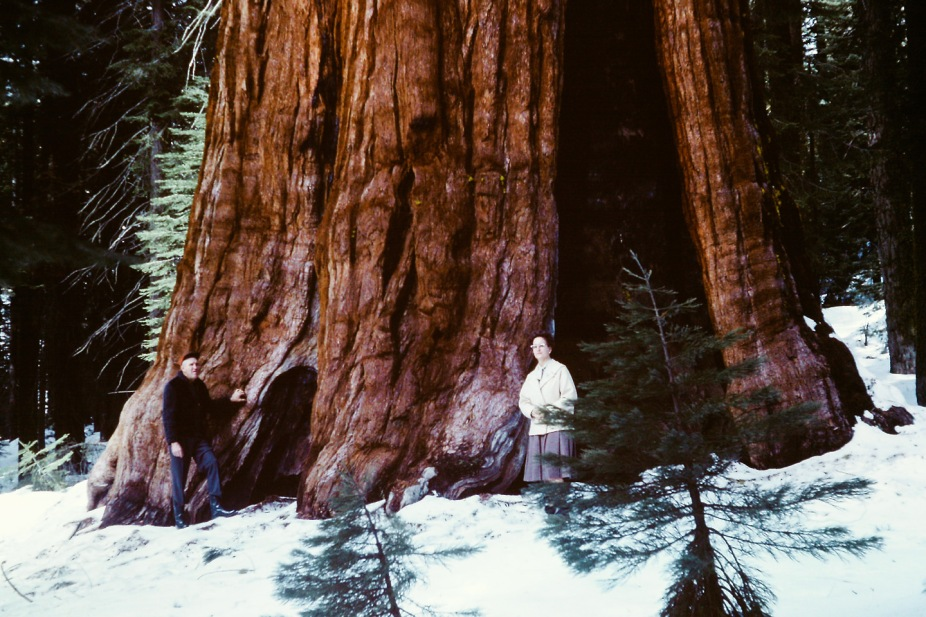 California Redwoods 1965 (67) copy